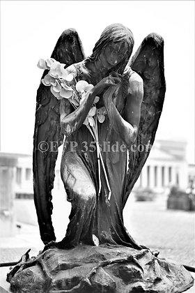 Verona Angel, Italy