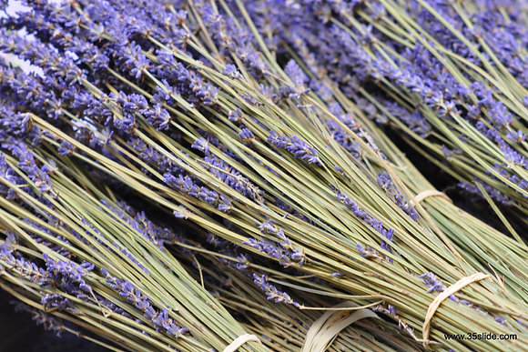 Dried Lavender, France