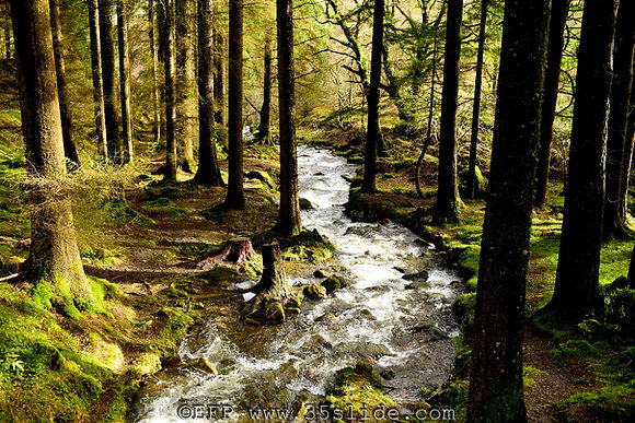 In The Forest of Glendalough, Ireland