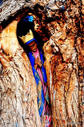 Virgin of the Tree, NM USA