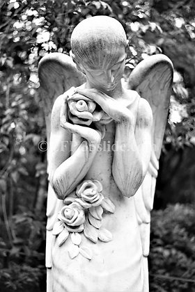 Angel with Roses, Italy