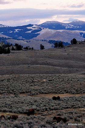 Moonrise and Buffalo, WY USA