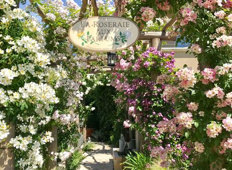 Staying at Le Mas De Pierre, A Provence Sanctuary