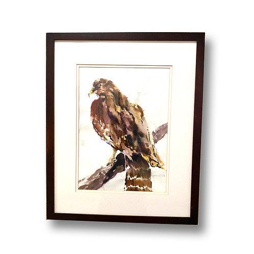 Hawk - Original Watercolor
