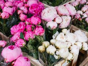 Creative Materials; Flower Garden