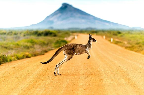 澳洲邊境開放公佈重大調整:這類簽證持有者有望提前返回澳洲!