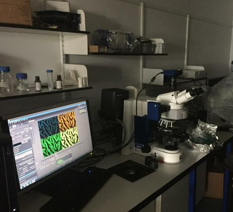 Fluoresence microscope.jpg