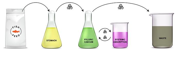 SalmoSim- bioreactors image.png