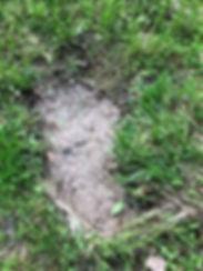 5-19-19 squatch footprint possibly 6.jpg