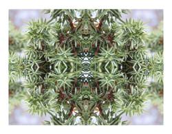 Natur geometri