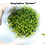 Thumbnail: Taxiphyllum barbieri