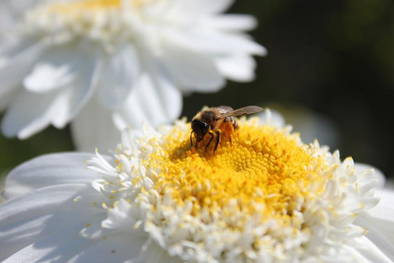 It's time to look for pollinators in your plot!