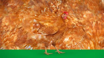 KRKA Chicken