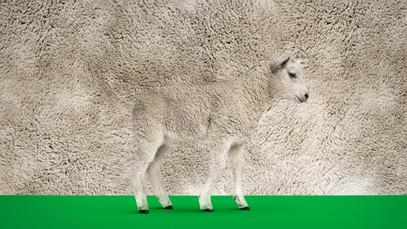 KRKA Lamb