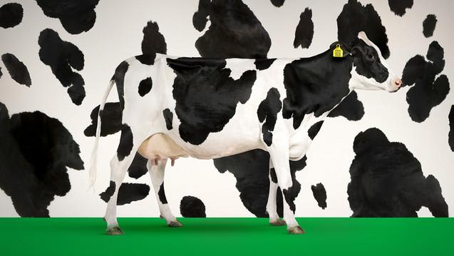 KRKA Cow