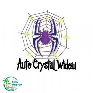 Auto Crystal Widow Feminized - 4 Seeds