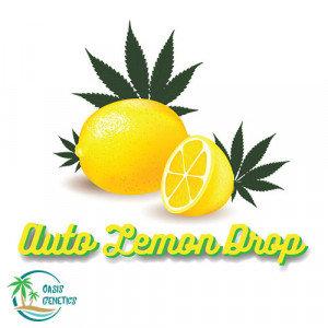 Auto Lemon Drop Feminized - 4 Seeds