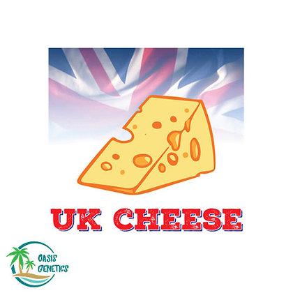 Auto UK Cheese Feminized Seeds - 4 Seeds