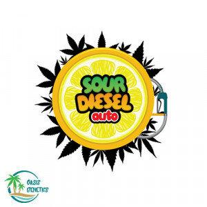 Sour Diesel AUTOFLOWERING FEMINIZED - 4 Seeds