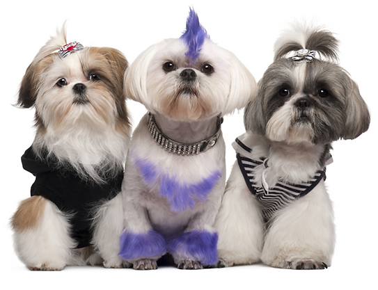 mohawk, glitter, colo on cute dogs