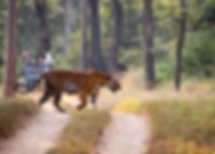 tadoba-national-park.jpg