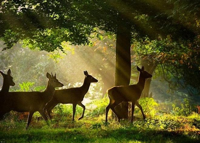mansinghdeo-wildlife-sanctuary-550x413.j
