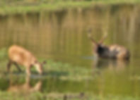 Kanha-National-Park.jpg