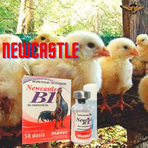 NEWCASTLE B1 25DS