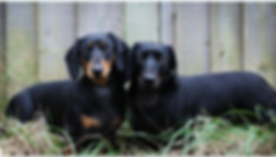 My boys-Spencer-Bertie-Wilkerson-MAR.PNG