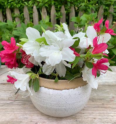 Flower vase, moon jar, flower pot, ceramic vase