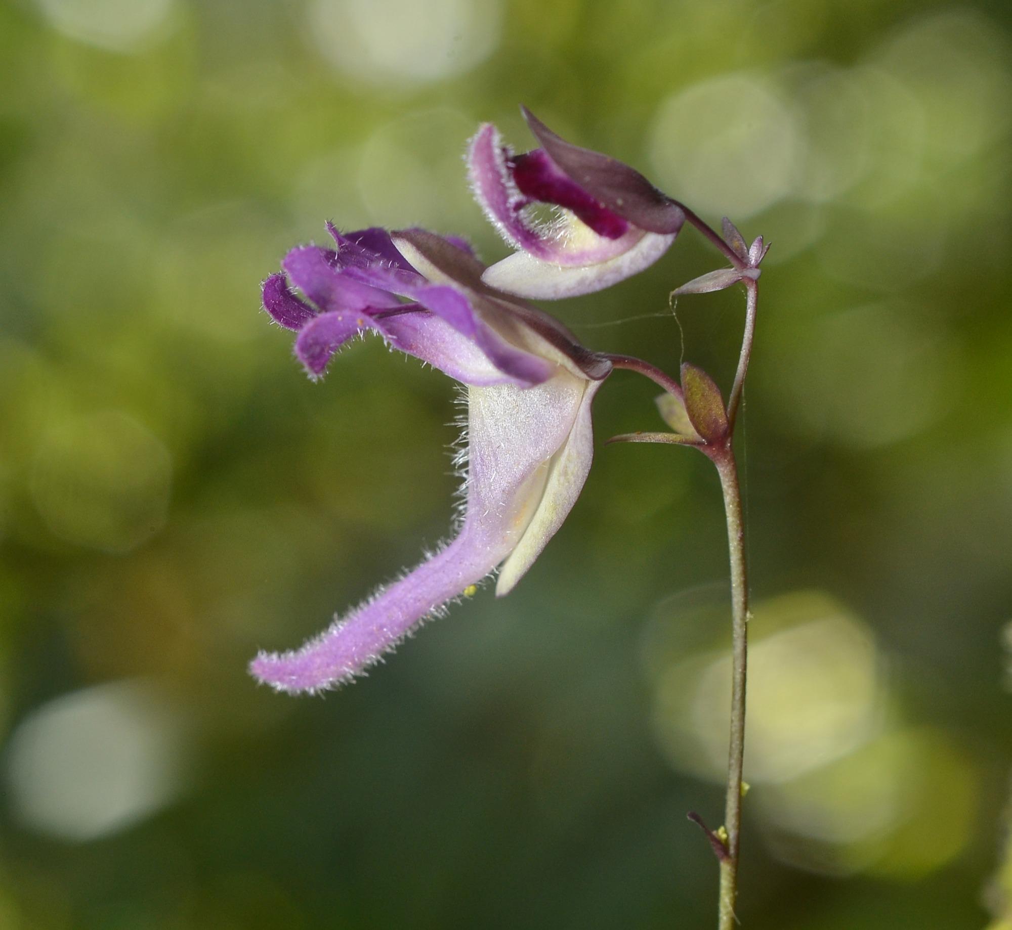 Primer Lugar. Categoría Flora  Autor: Henry Garzón Suárez