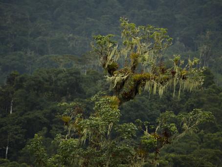 Más de 4 mil hectáreas se suman al Parque Nacional Río Negro Sopladora