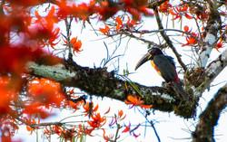Primer Lugar Concurso Fotográfico. Categoría Fauna. Autor: Carlos Steeven Pérez Malla
