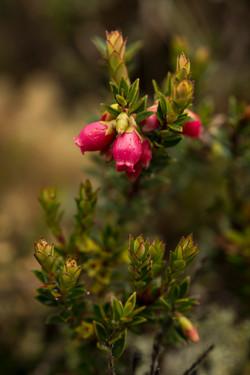 Las plantas de páramo tienen estrategias para protegerse del frío, como hojas y flores muy pequeñas.