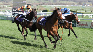 Horse Racing: Cheltenham Festival Hero Might Bite Retires. Watch One Of The Most Amazing Finishes