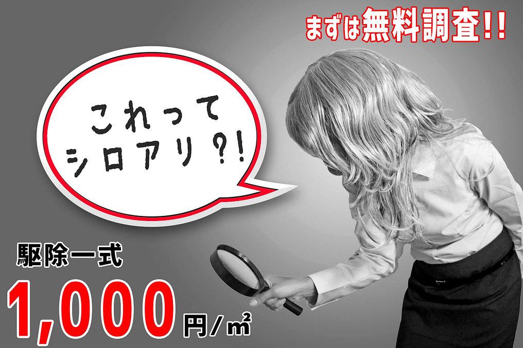 シロアリ調査隊は駆除一式1,000円