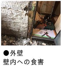 白蟻による外壁内壁への食害画像