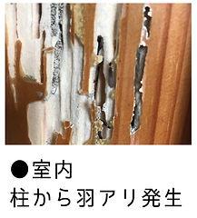 室内柱から羽アリ大量発生画像