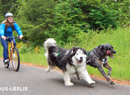 Runnin' with the Dogs