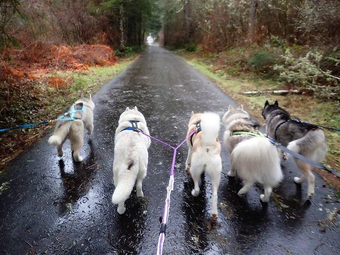 traildog