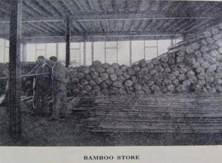 Hardy's Bamboo Culms
