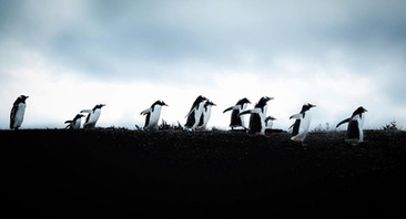pinguinoushuaia.jpg