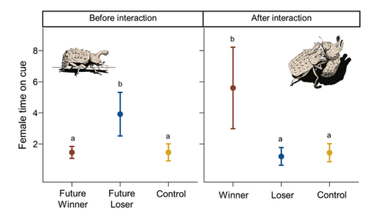 Male competition reverses female preference for male chemical cues