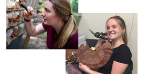 """Phoebe Cook and Olivia Baker Have """"Double Hoo"""" Research Grant Renewed"""