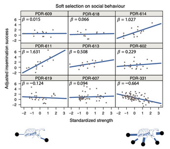 Social network position experiences more variable selection than weaponry in wild subpopulations of forked fungus beetles