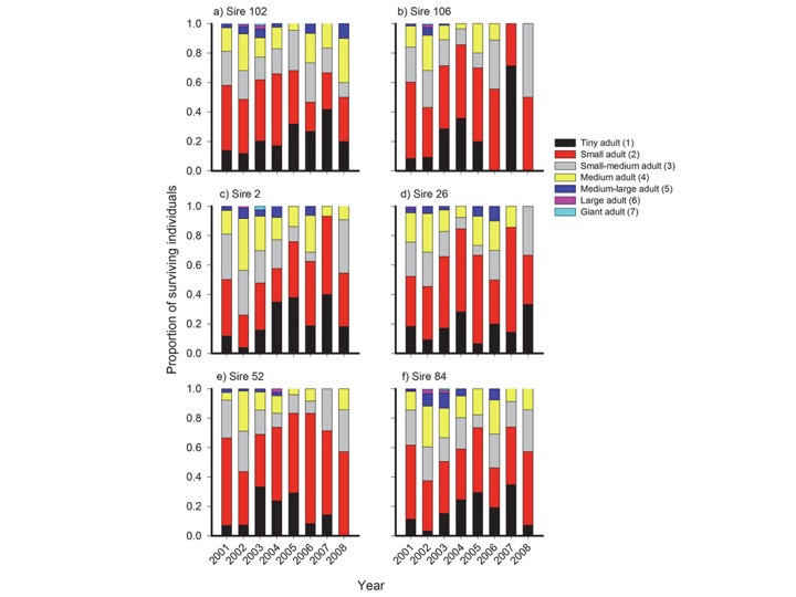 Longitudinal analysis in Plantago: strength of selection and reverse age analysis reveal age-indeterminate senescence