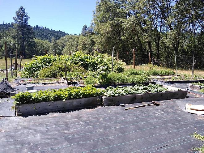 Gaias Garden 2.jpg
