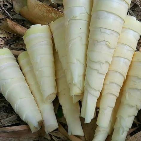 Bamboo food.jpg