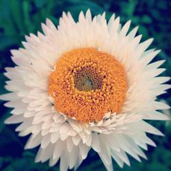 Una flor en Guatavita