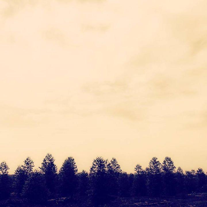 Hoje foi dia de fotografar os eucaliptos babys! 🌱